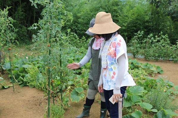 ミニトマトの栽培方法