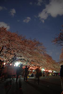 2012sakura