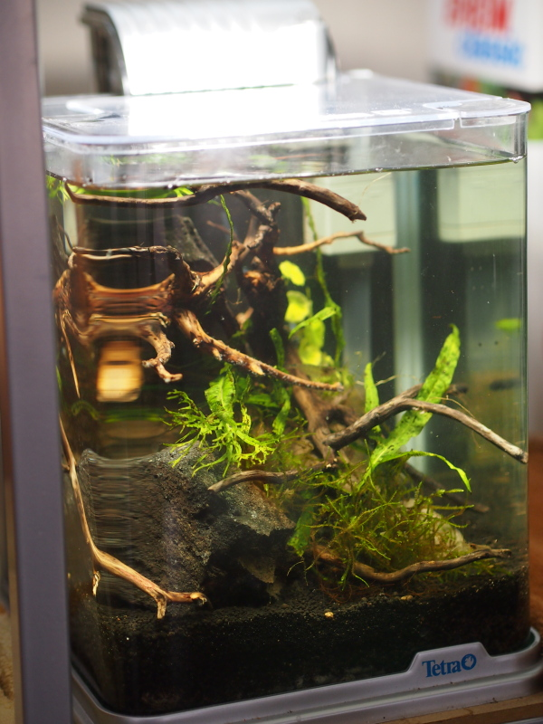 小型水槽に流木