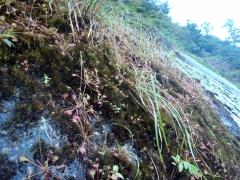 苔むした屋久島の花崗岩の斜面