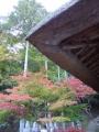 常楽寺 茅葺き屋根のお堂