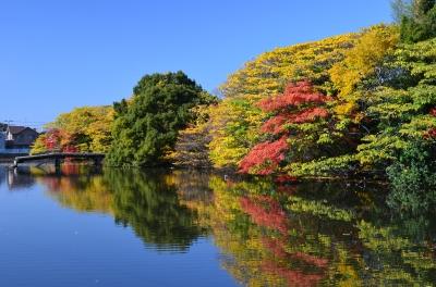 色付いた樹木が水面に映しだされて綺麗でした☆ おった!!(笑)  気持... 『いたすけ古墳のた