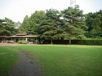 キャンプ場芝生サイト