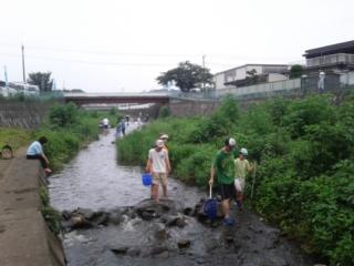 霞川水辺体験2013