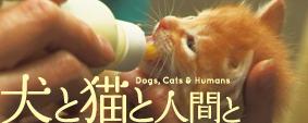 「犬と猫と人間と」