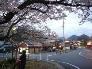 寺の前の桜