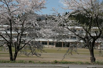 裏磐梯の桜