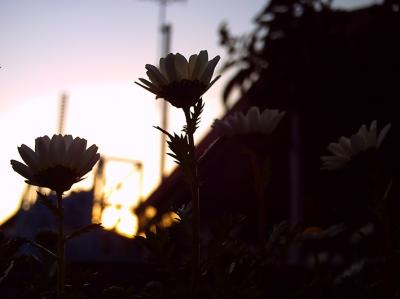 夕暮れ時の風景