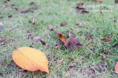 落葉と芝生 きまぐれ*Photo