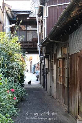 いつもの路地と黒猫