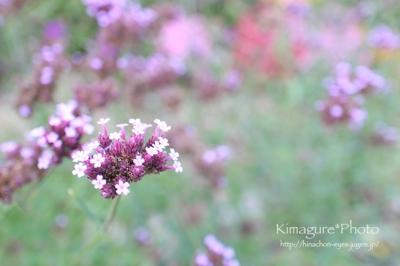 薄紫の小さな花 きまぐれ*Photo