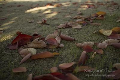 落葉と枯葉 きまぐれ*Photo