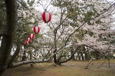 五色浜 桜