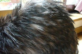 くろたんの毛