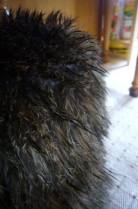 ライアの毛