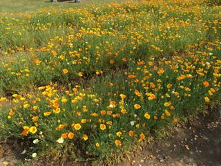 牛久大仏の定聚園の花