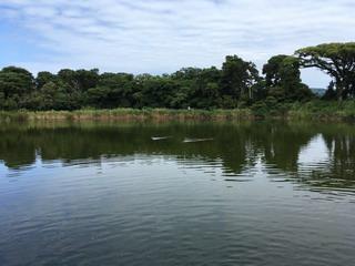 大瀬神社の神池