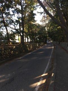 寒川神社への道