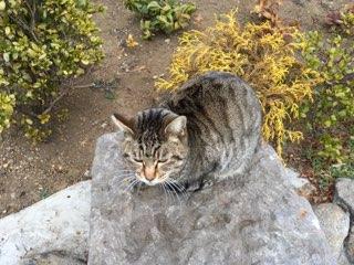 川崎大師の猫