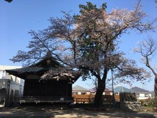 篠原八幡神社の桜