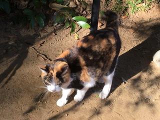 麻賀多神社の猫