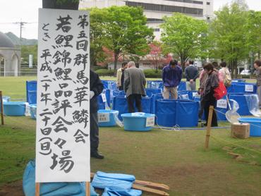 群馬県若鯉品評会開催(桐生市)