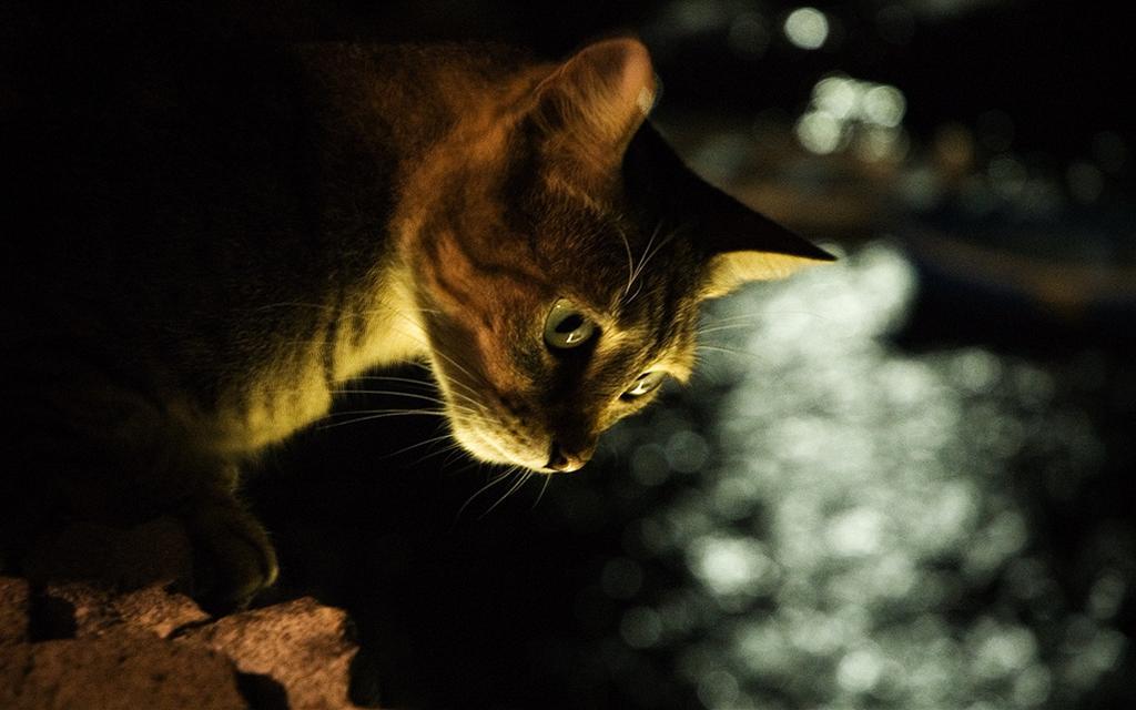 何かを覗く猫