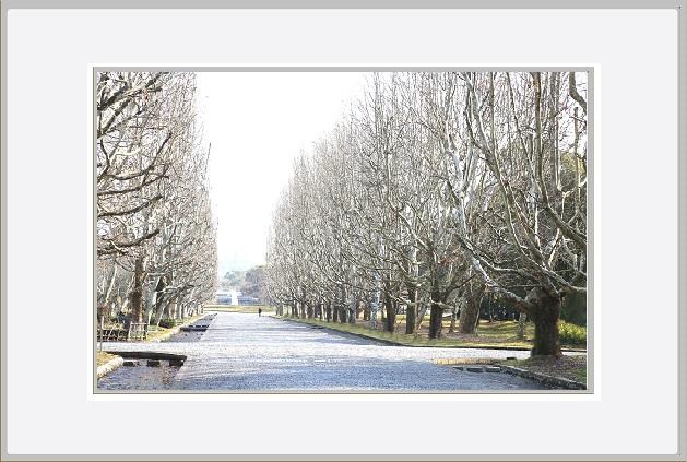 冬の万博公園ー1.jpg