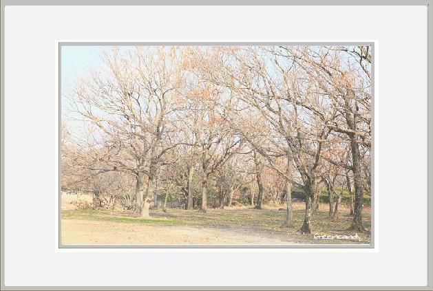 冬の万博公園ー4.jpg