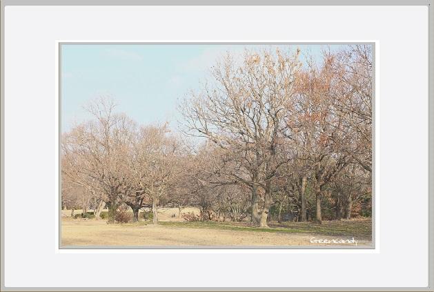 冬の万博公園ー5.jpg