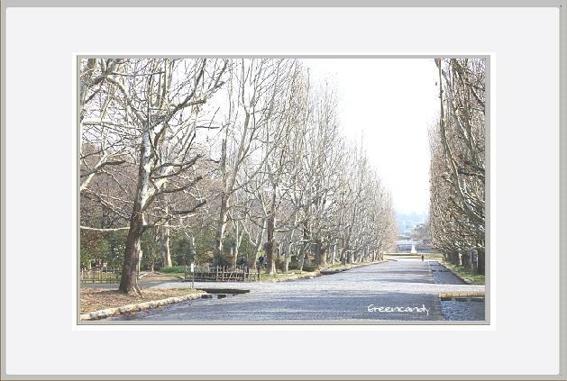 冬の万博公園ー2.jpg