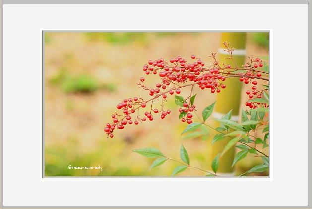 竹林と南天ー4.jpg