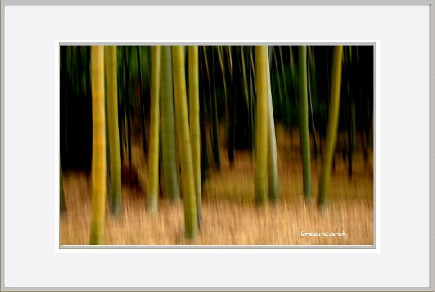 竹林と南天ー1.jpg
