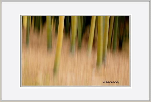 竹林と南天ー2.jpg
