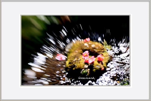 水と椿ー1.jpg