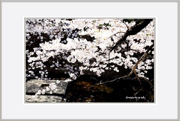 夙川公園ー3.jpg