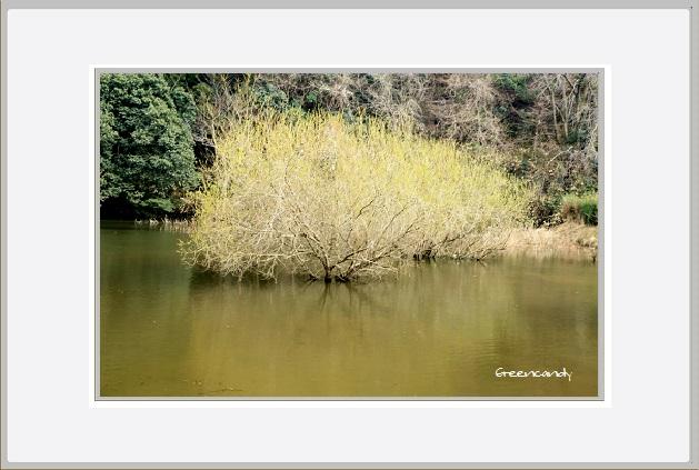 室生湖-1.jpg