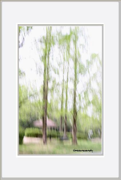 公園の風景ー5.jpg