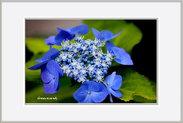 家の花ー4.jpg
