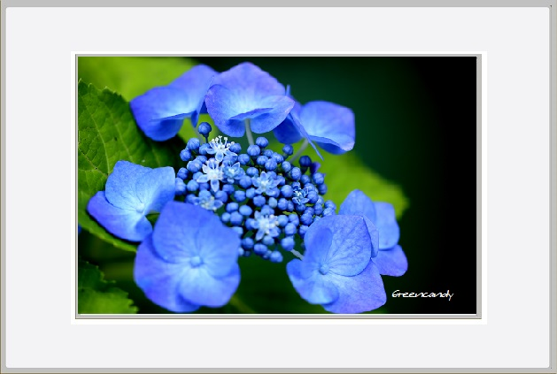 家の花ー1.jpg