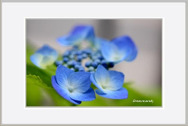家の花ー2.jpg
