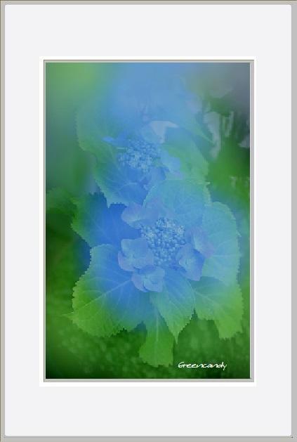 家の花ー3.jpg