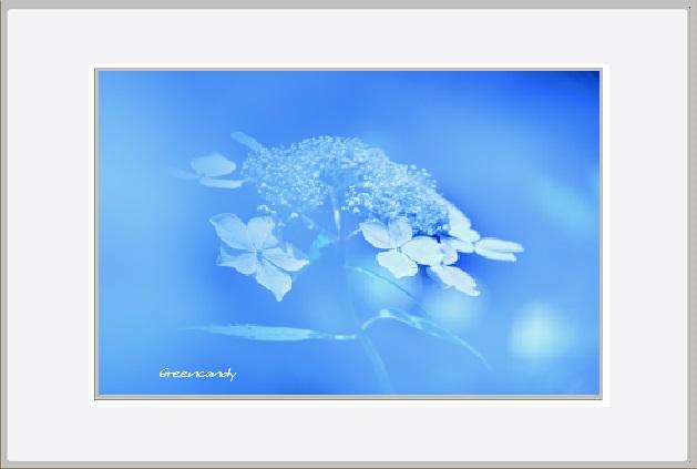 紫陽花ー10.jpg