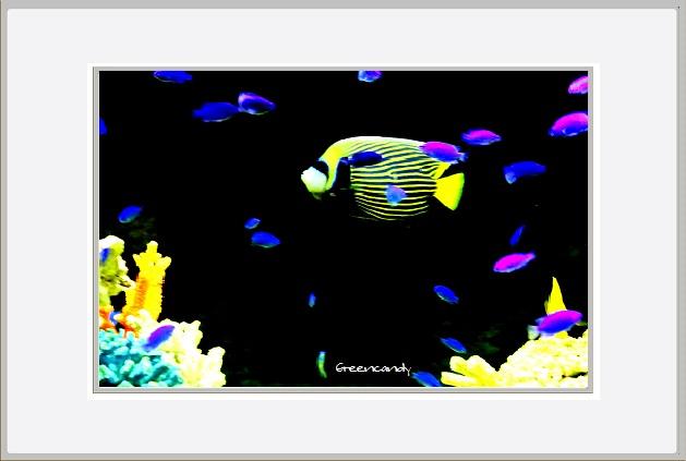 移動式水族館-3.jpg