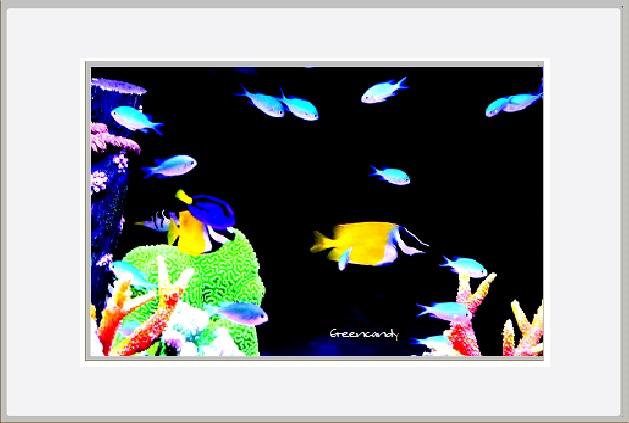 移動式水族館-4.jpg