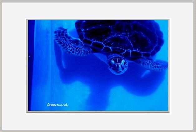 移動式水族館-6.jpg