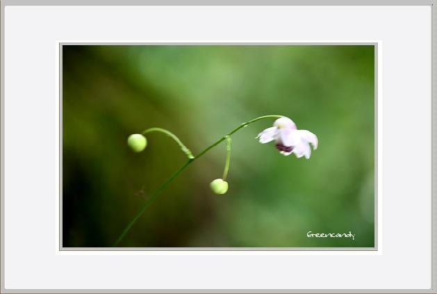 六甲高山植物園 - 2.jpg