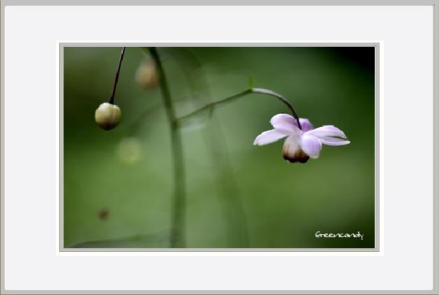 六甲高山植物園 - 4.jpg