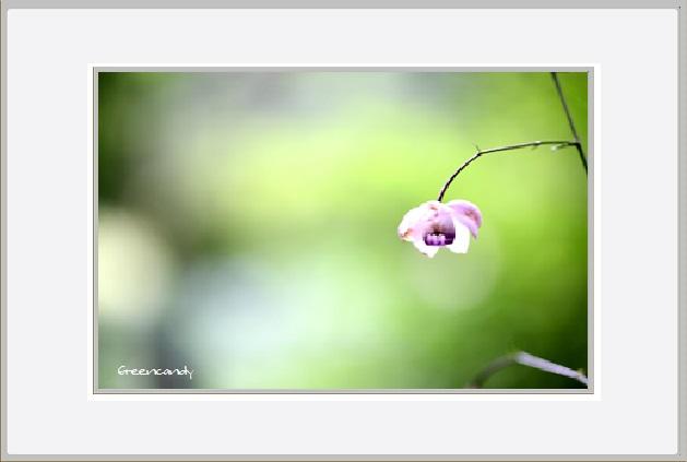 六甲高山植物園 - 1.jpg