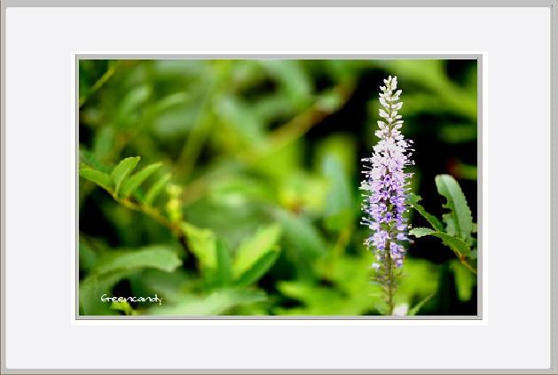 六甲高山植物園 - 6.jpg